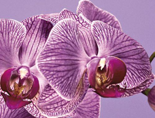 2014 Yılının Rengi: Parlak Işıltılı Orkide